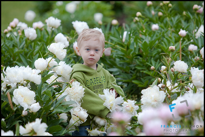 Small boy in a Peony field at the Nichols Arboretum in Ann Arbor