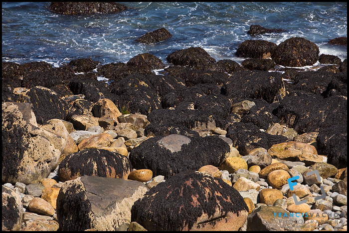 Rocky shore of Acadia National Park