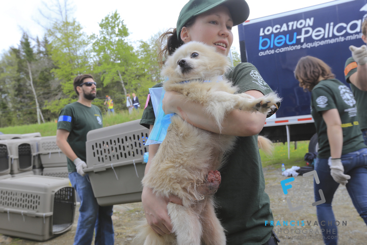 Photo Shoot at a large scale dog rescue in Bonsecours, Canada