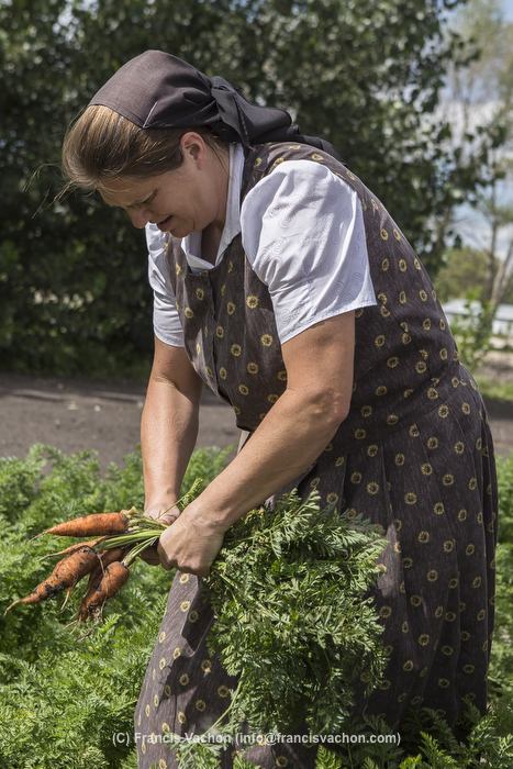 A Hutterite woman picks carrots in a New Rosedale Hutterites colony field in Manitoba, Monday August 17, 2015. Hutterites are am ethno-religious group who, like the Amish and Mennonites, trace their roots to the Radical Reformation of the 16th century. THE CANADIAN PRESS IMAGES/Francis Vachon